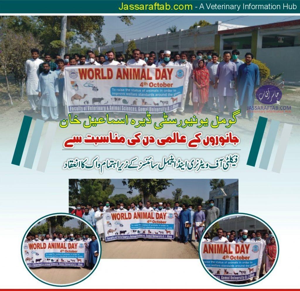 world animal day dera ismail khan