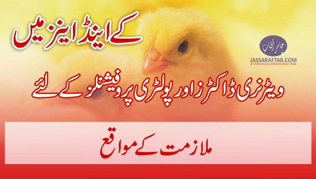 broiler poultry farm manager