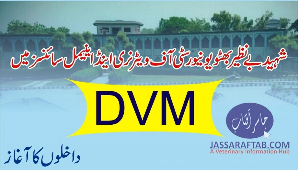 DVM admissions started at SBBUVAS Sakrand