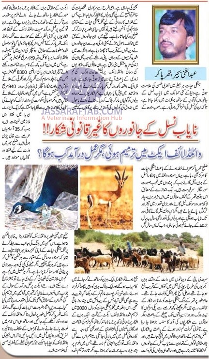 Illegal hunting of wildlife
