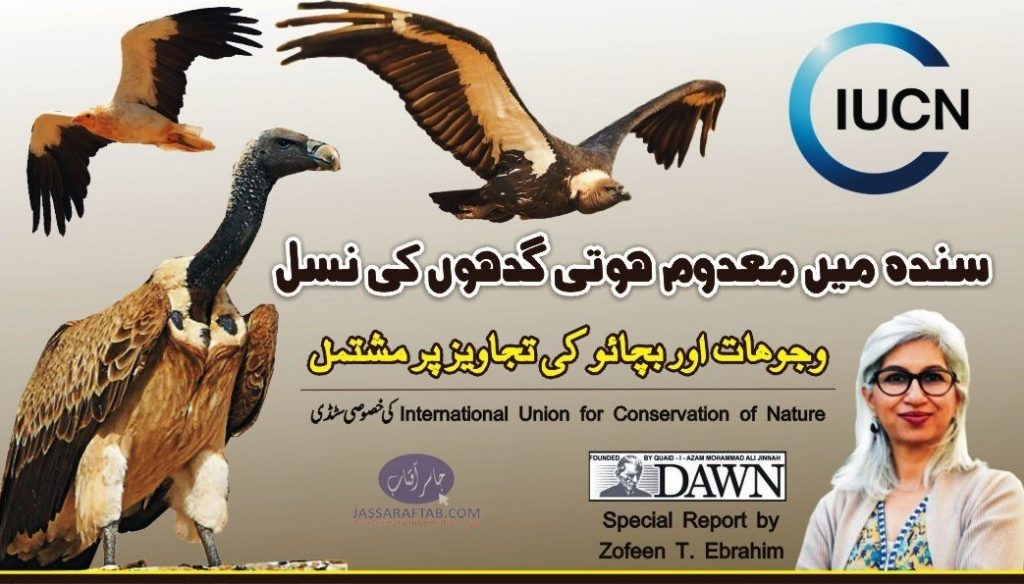 Conservation of Vultures