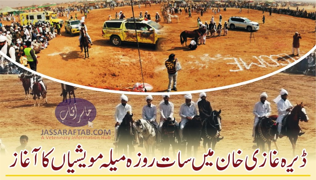Cattle fair  begins in DG Khan