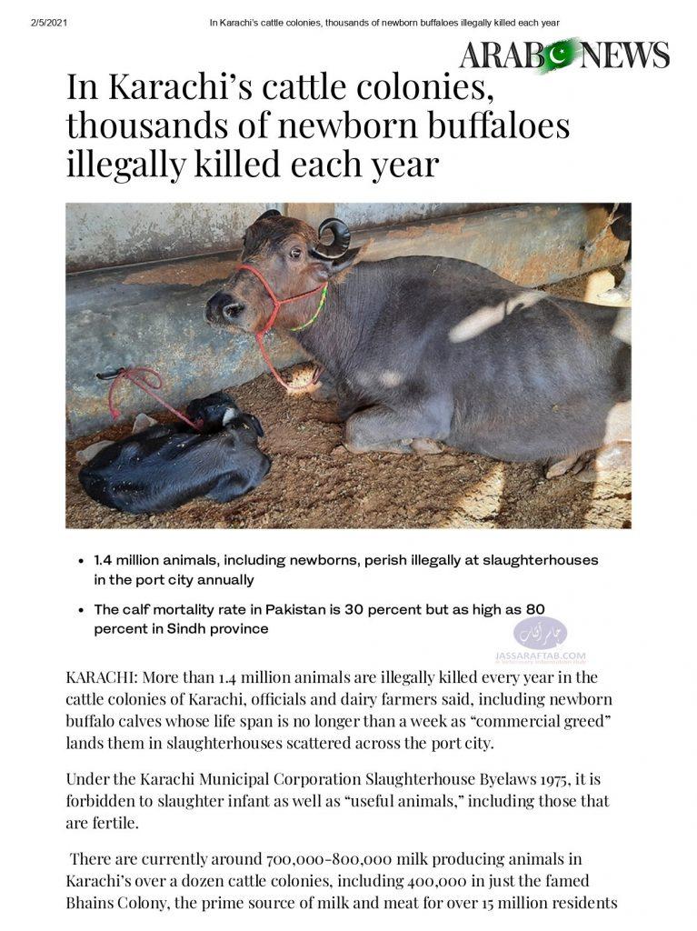 Killing of Buffalo Calves