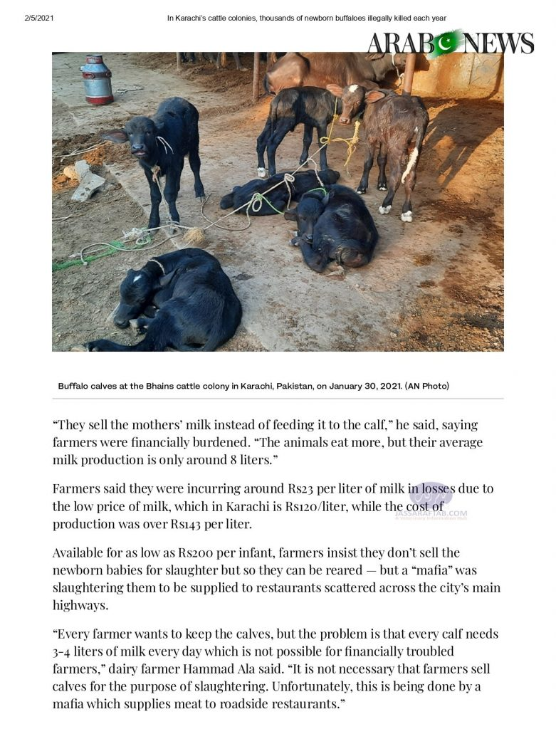 illegal slaughtering of buffalo