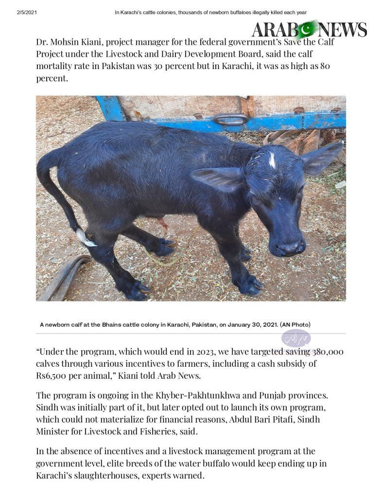 killing of milking animals