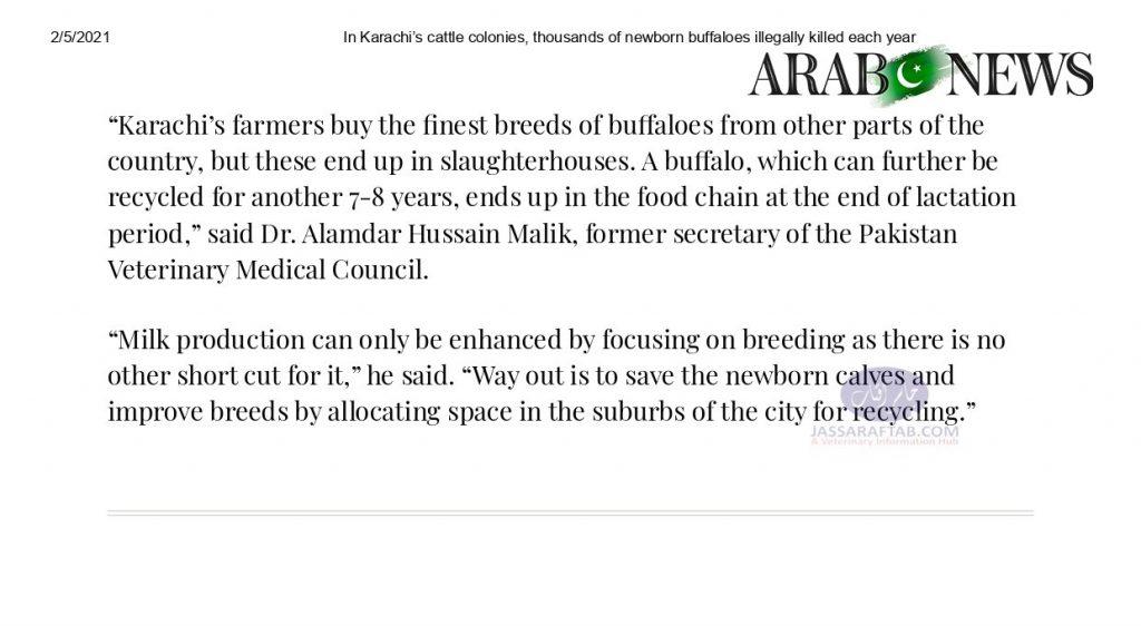 killing of newborn calf slaughtering