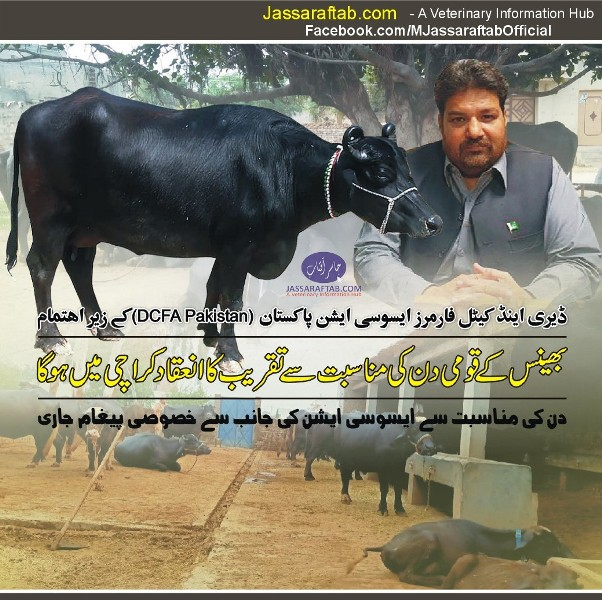 national buffalo day