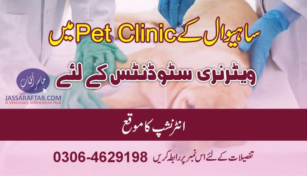 DVM INTENSHIP in pet clinic