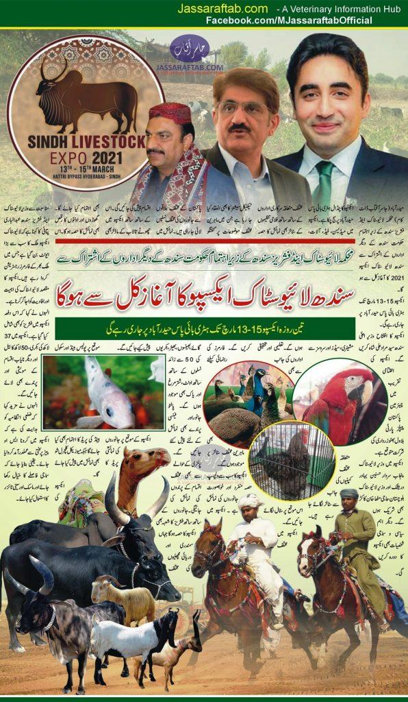 sindh livestock expo