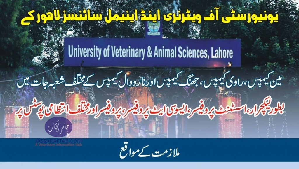 UVAS lecturer and professor jobs