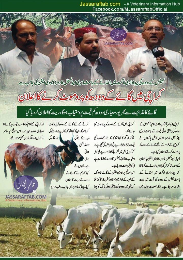 Cow milk sale in karach