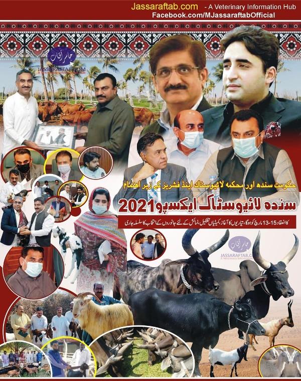 Sindh Livestock Expo 2021