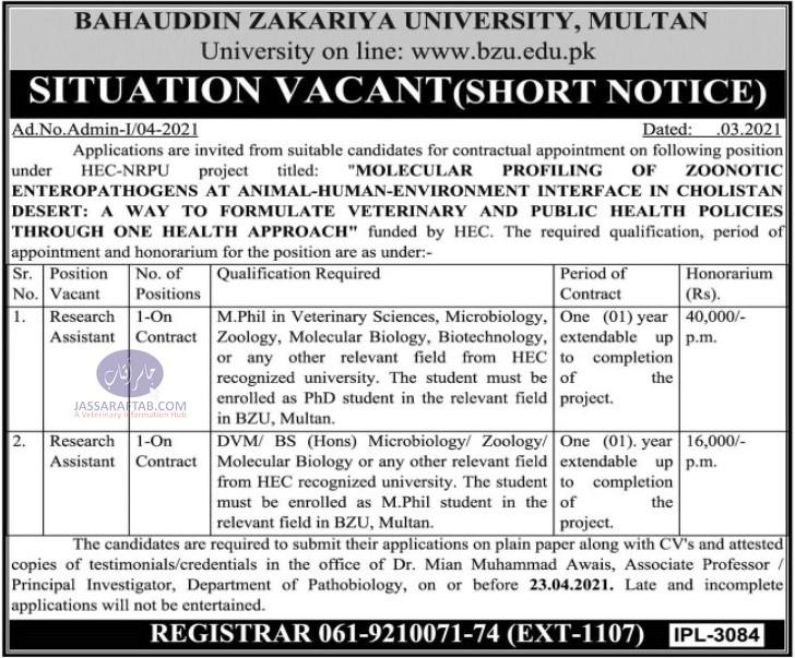 BZU Multan Research assistant Job