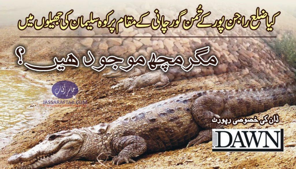 mugger corocodile in pakistan
