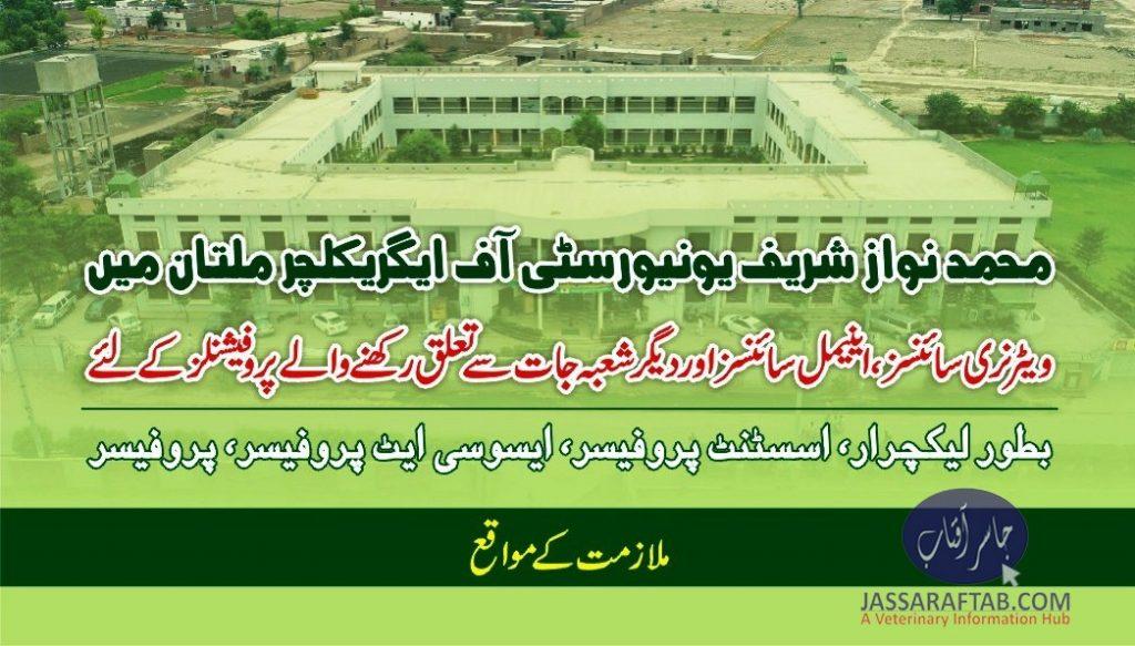 nawaz sharif university jobs