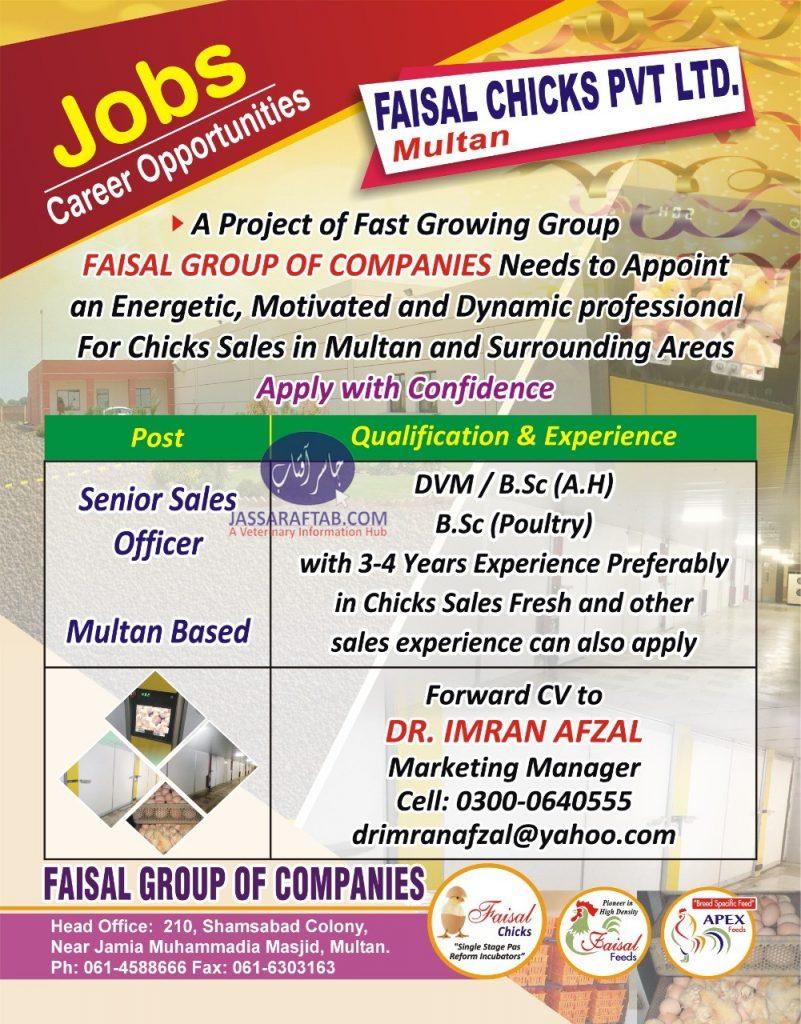 faisal chicks jobs