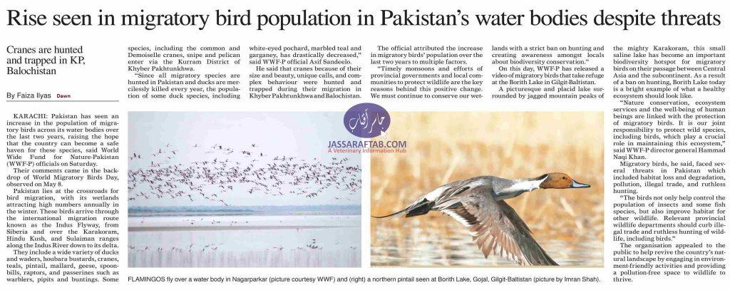 rise in migratory birds