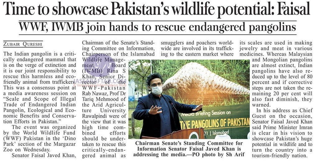 80pc of country's pangolins lost to illegal hunting: WWF