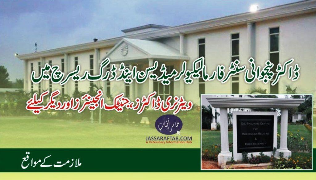 DVM job karachi