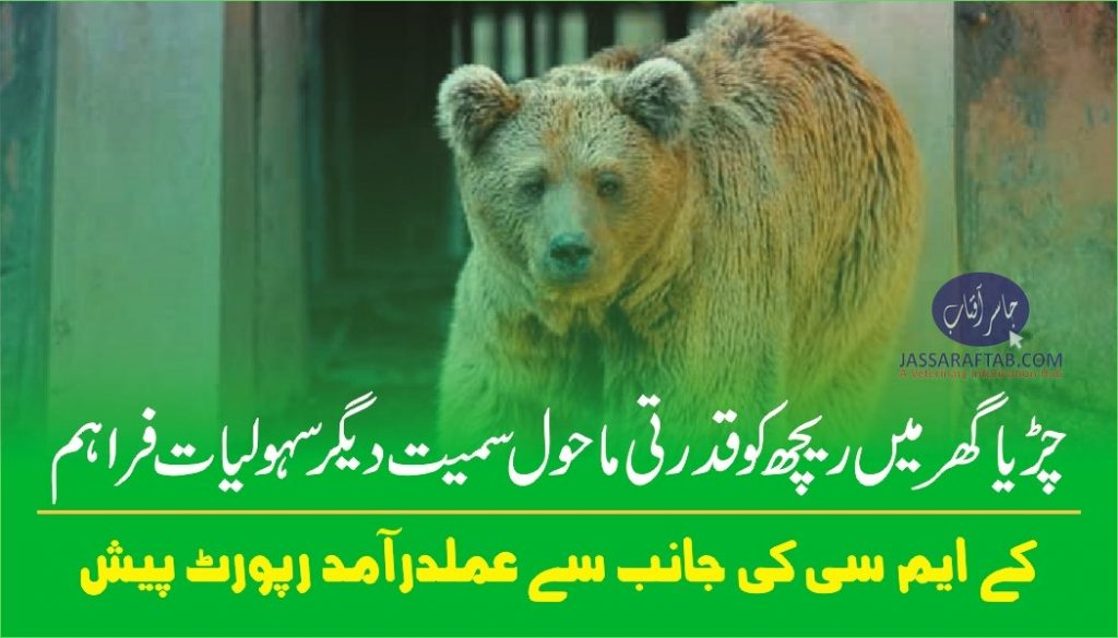 KMC presented a report in court regarding arrangements for zoo animals