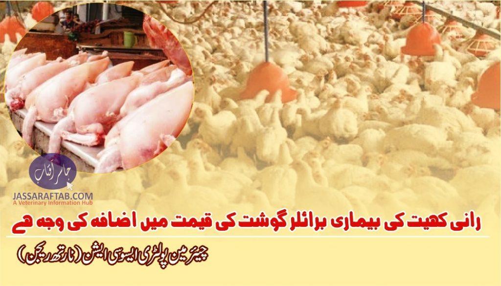 Increase in broiler meat rate