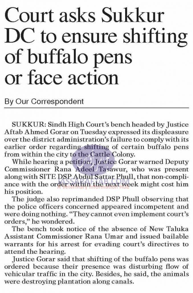Shifting of Buffalo pens