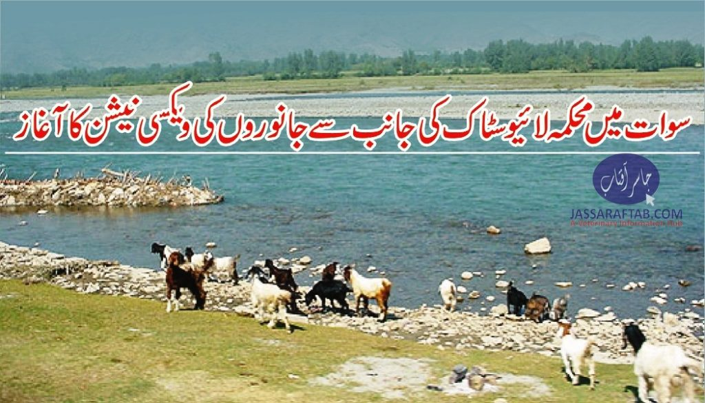 Vaccination of animlas in Swat