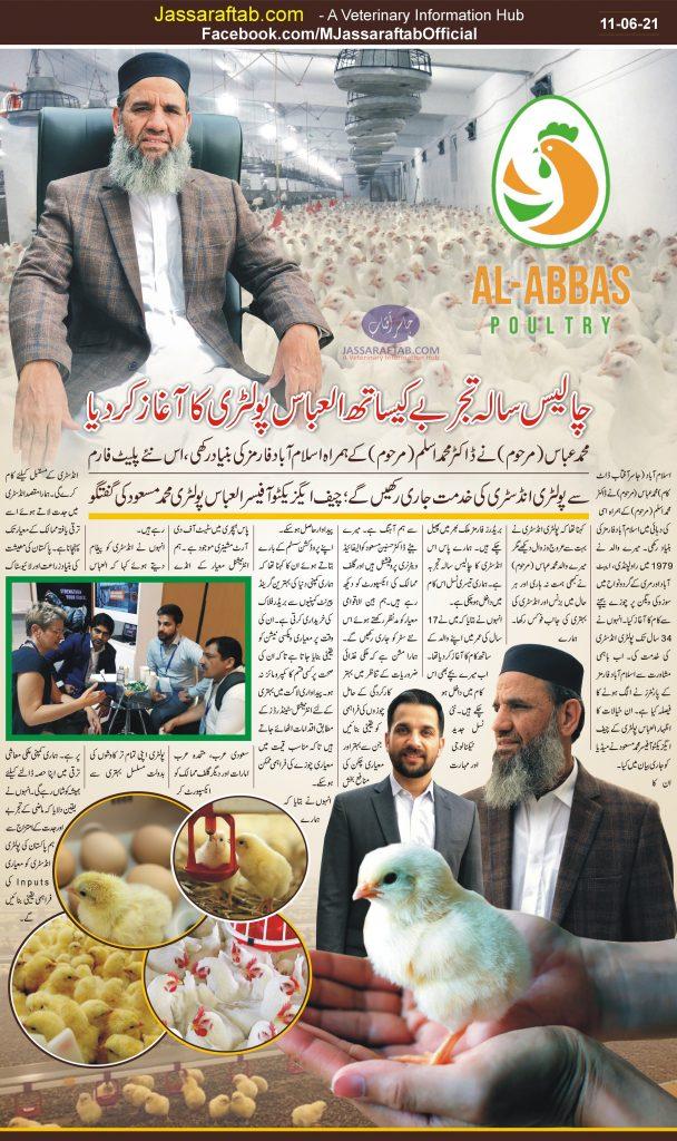 Al Abbas poultry chicks