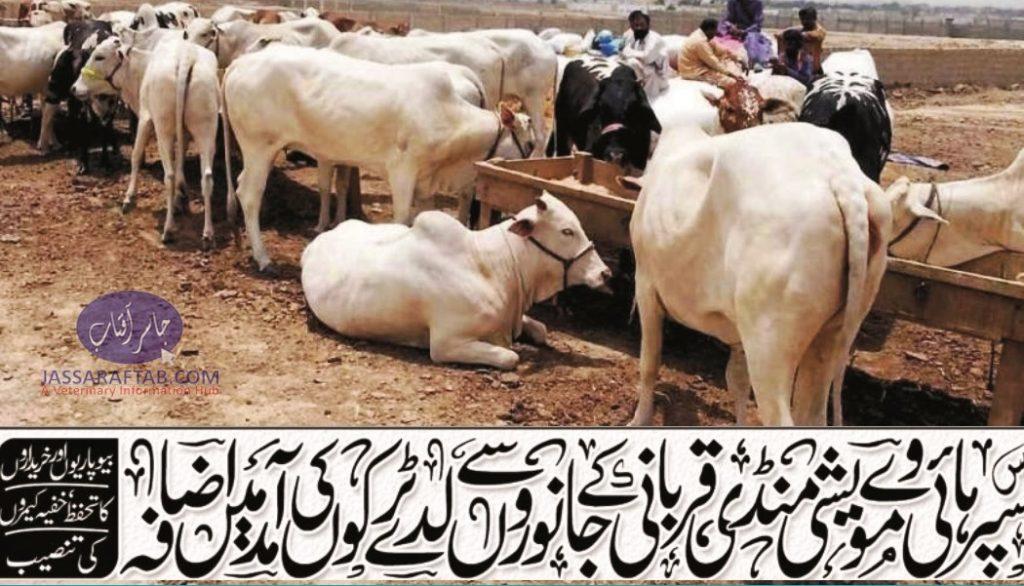 Asia's largest cattle market set up near Super Highway