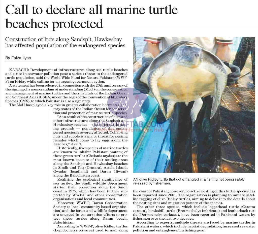 Call to declare all marine turtle beaches protected