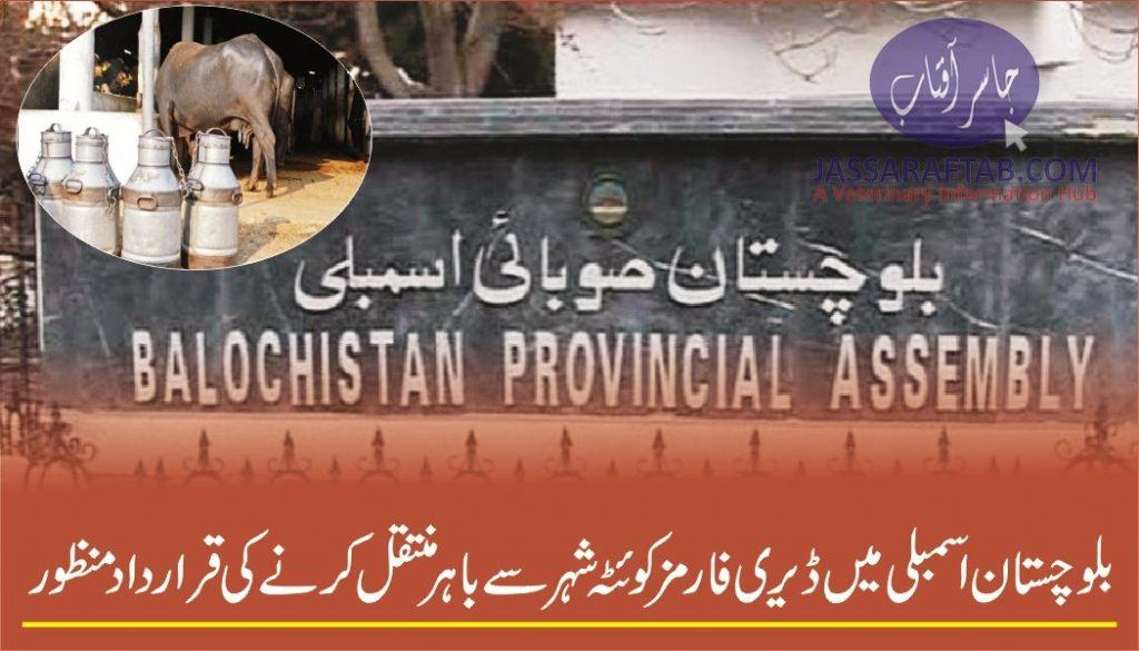 Dairy farms in Quetta