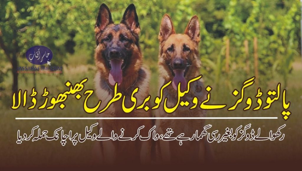 pet dog attack