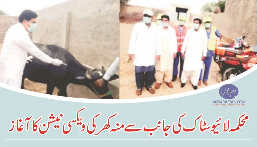 FMD vaccination