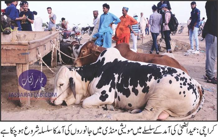 Karachi super highway cattle market