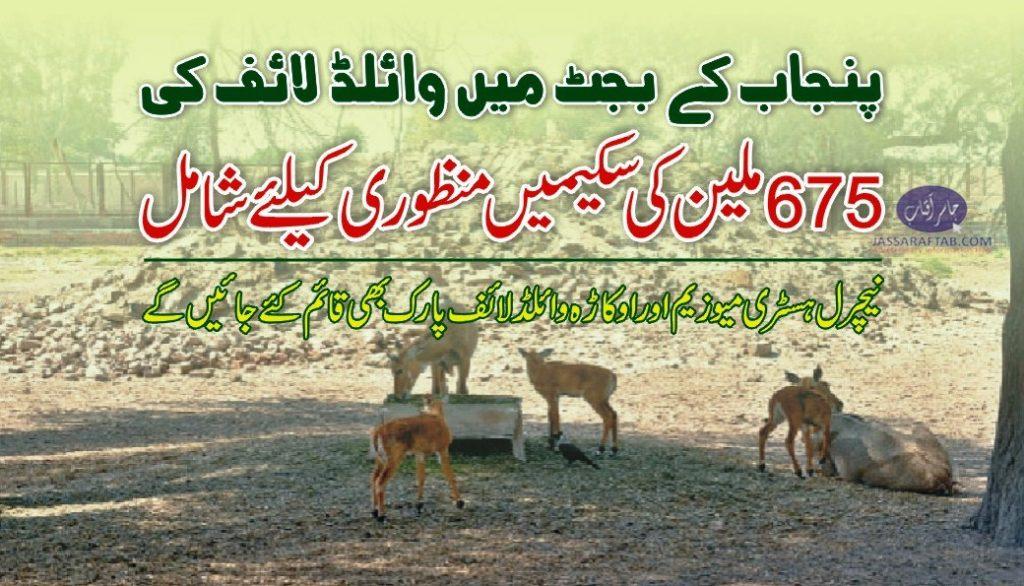 wildlife development budget
