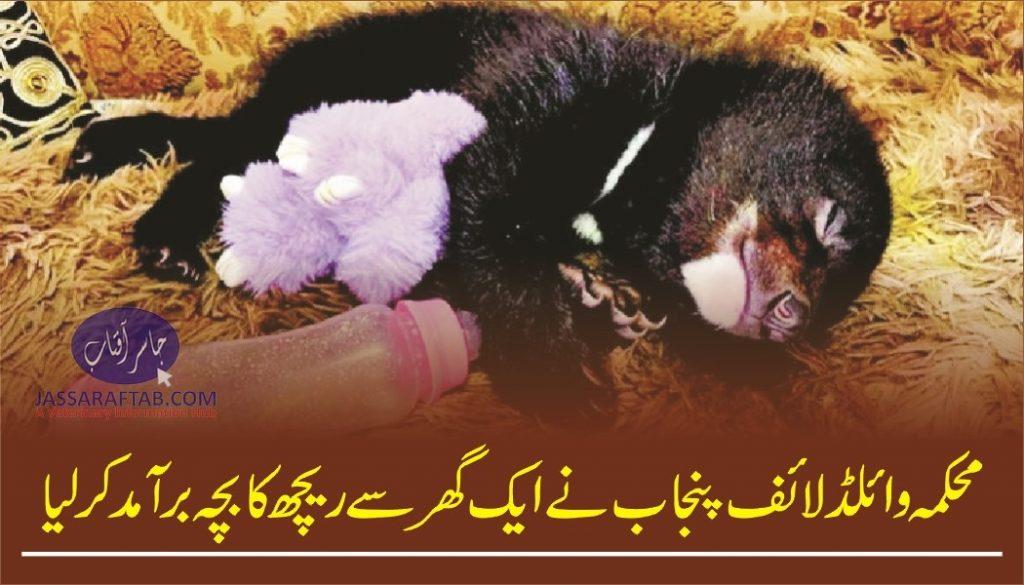 Wildlife dept takes possession of bear cub