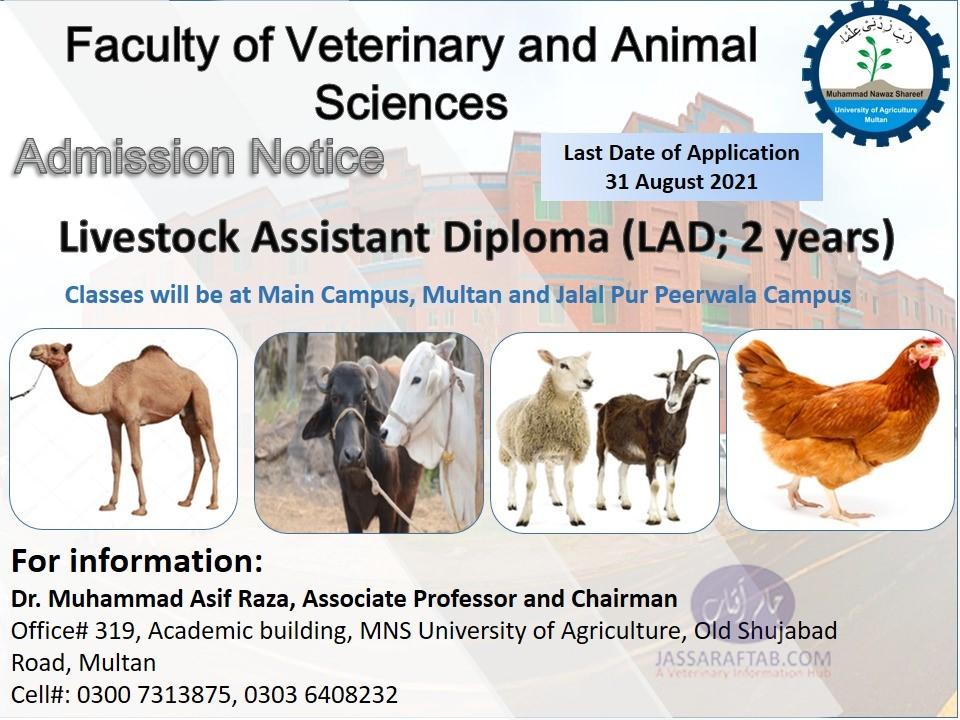 Livestock Assistant Diploma