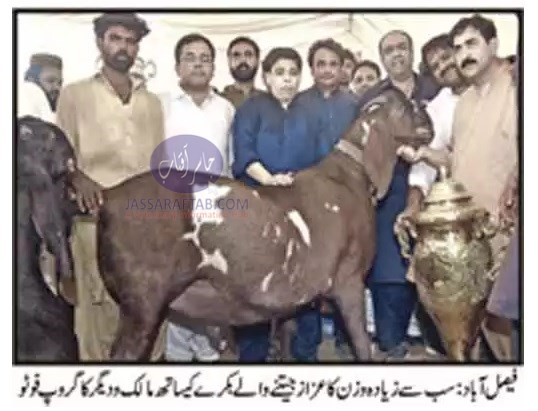 annual weight competition for sacrificial animals