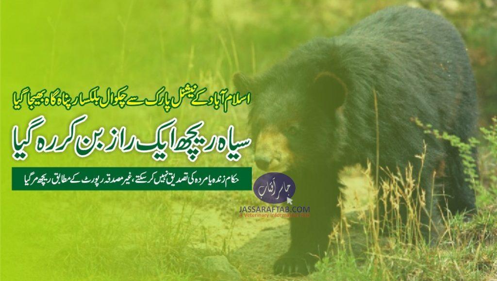 balkasar bear sanctuary chakwal