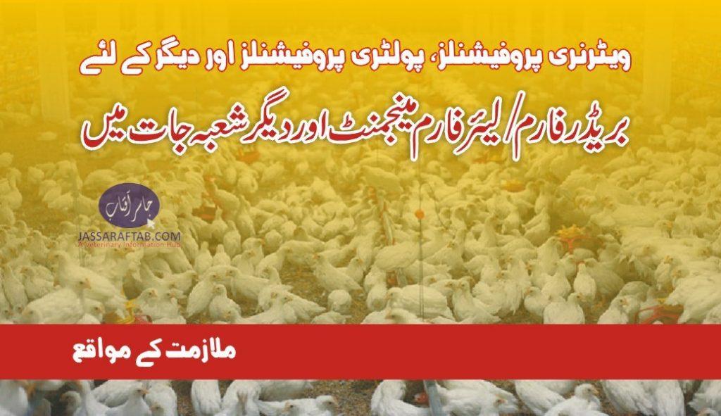 poultry farm management job