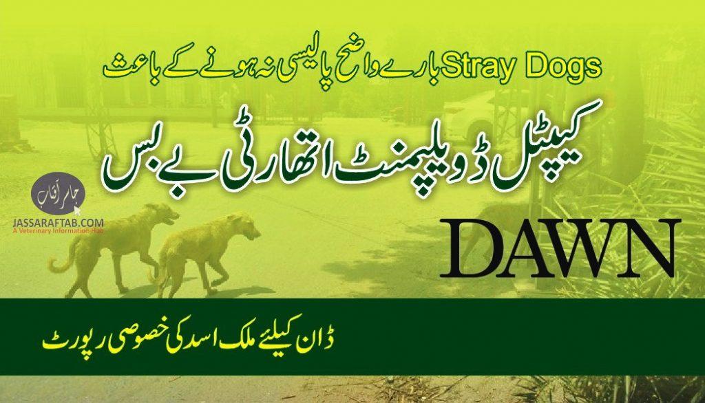 Stray Dog Policy of Islamabad