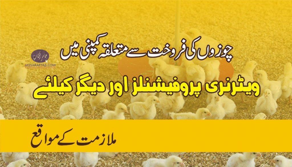 Chicks sales jobs