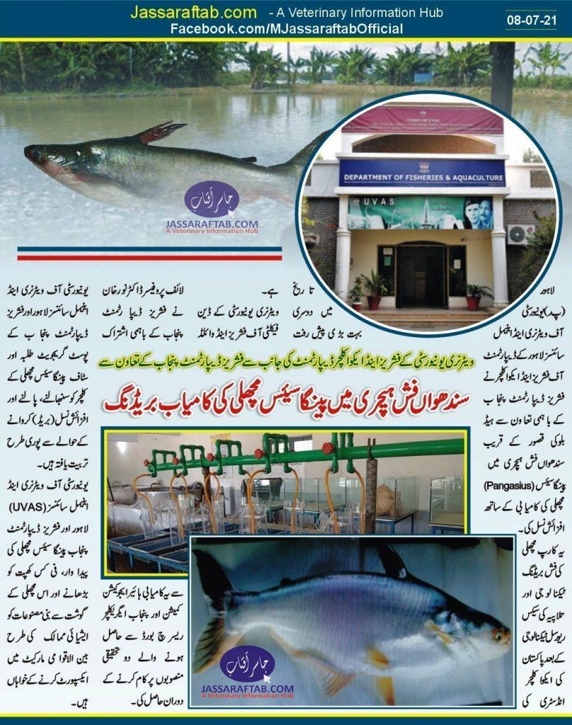 Panguasis Fish Breeding in Pakistan