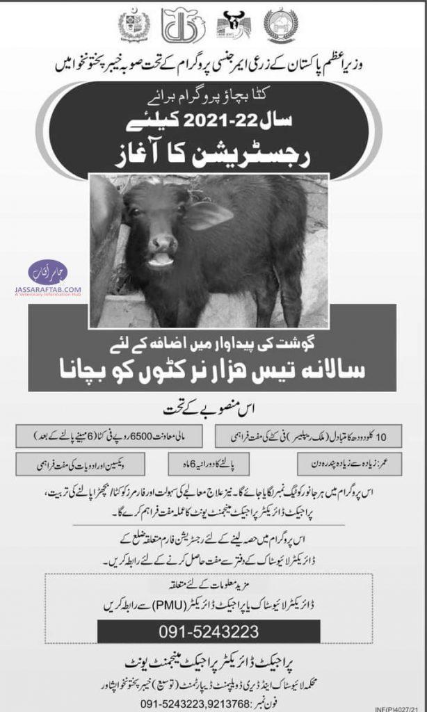 save the calf program
