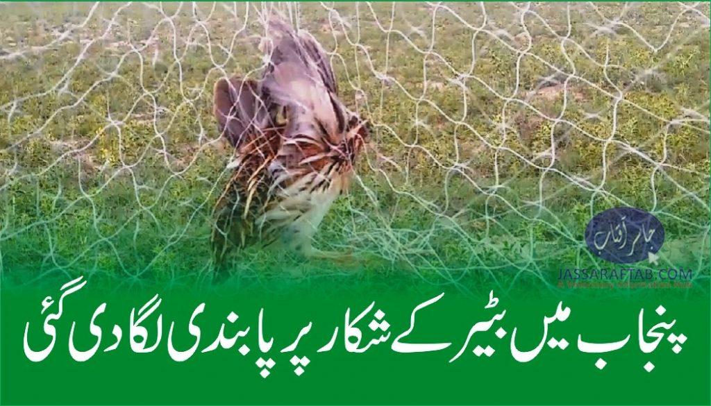 Ban on Quail hunting