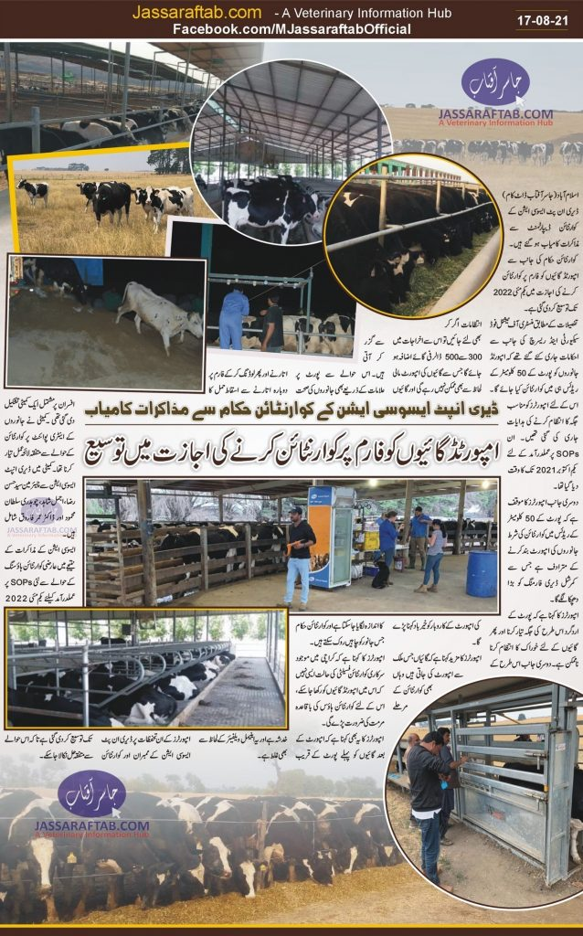 Dairy Cow Import