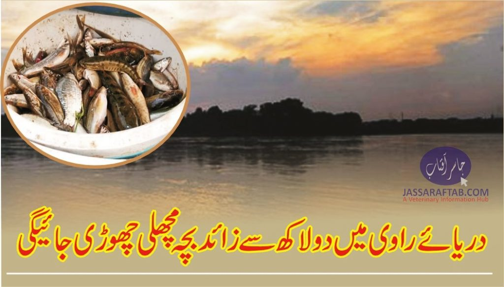 Fish seed to releaae in River Ravi
