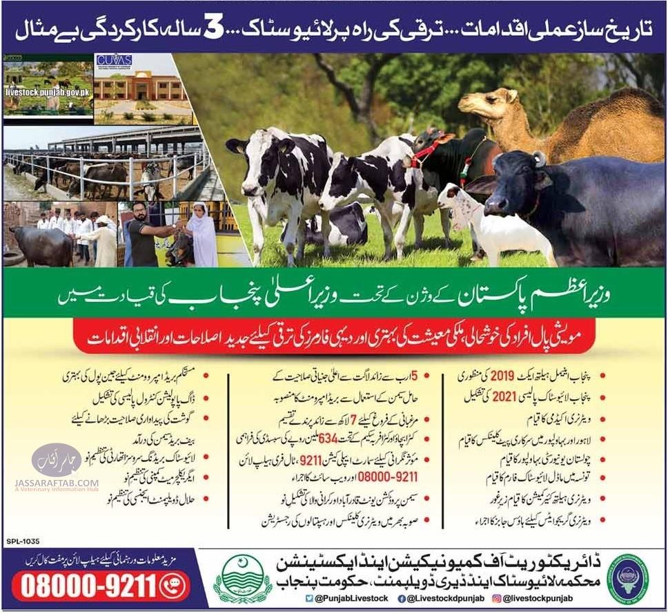 Livestock performance advertisement