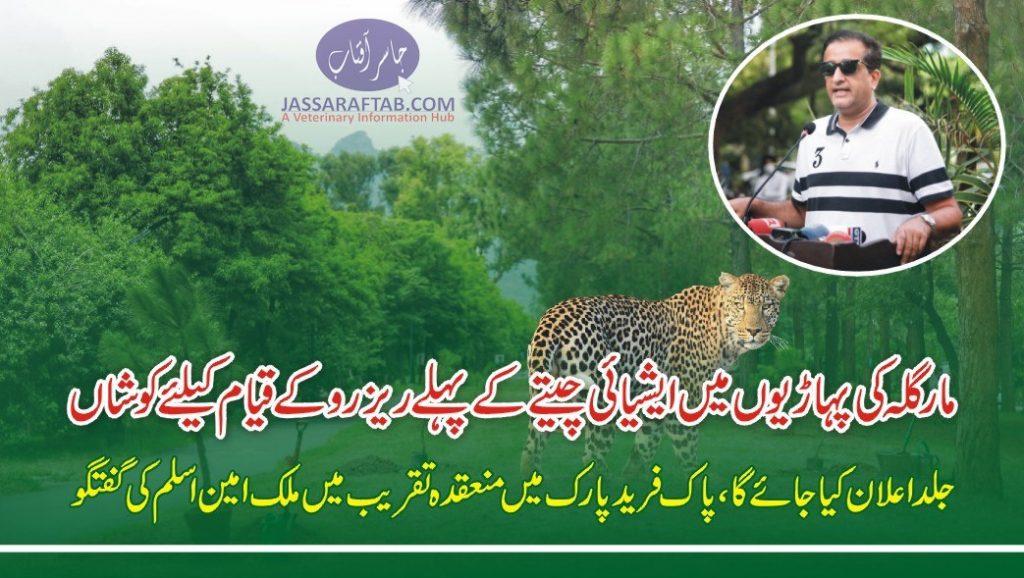 Wild Cats reserve