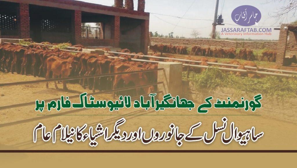 Jahangirbad cattle farm animals